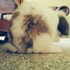 I have cute buns. #rabbit #petbunny #bunny #pets #buns #cute