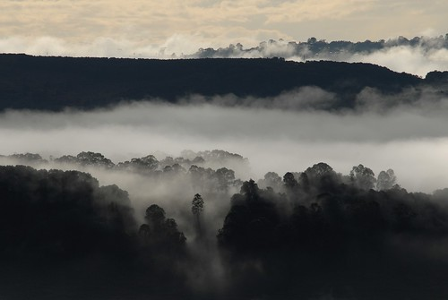 morning plants mist nature fog countryside scenery australia valley nsw ridges northernrivers morninglandscape wilsonsrivervalley