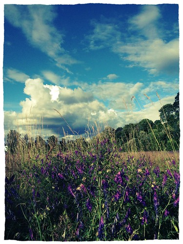 flowers sky clouds sellwood oaksbottom uploaded:by=flickrmobile flickriosapp:filter=chameleon chameleonfilter
