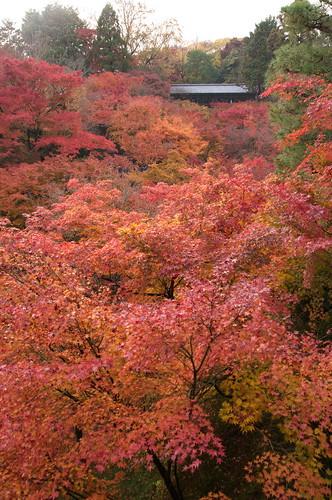 【写真】2012 紅葉 : 東福寺(2)/2017-11-27/IMGP7161