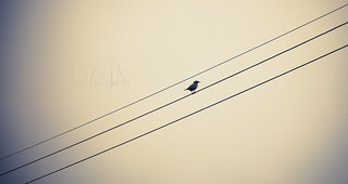 | | bird |
