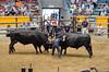 Photo:Bullfighting in Uwajima By cotaro70s