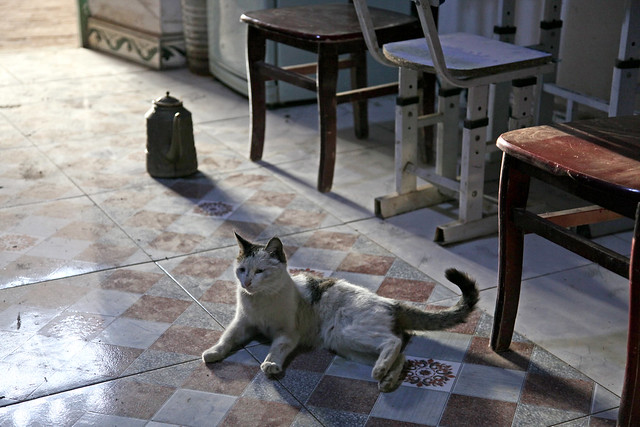 A cat in a local house, Shanshan (Piqan) County ルクチュン、民家のネコ
