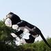 el gato volador por jvcluis