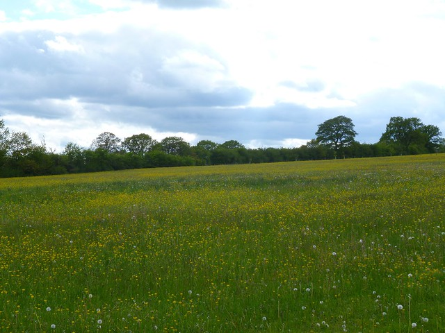 Header of A Field in England