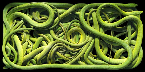 Tim Flach green snake