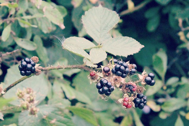 British_blackberries
