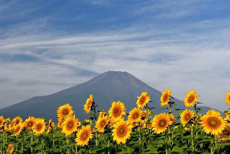 花の都公園20130809