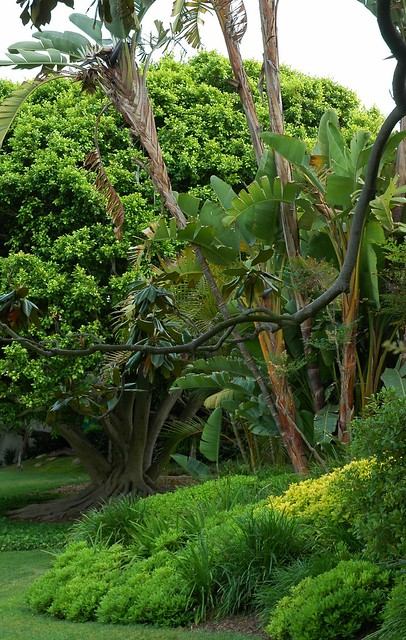 The Long Branches Jungle Field Meditation Garden Self Realization Fellowship Encinitas