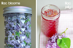 How to Make Lilac and Redbud Jellies