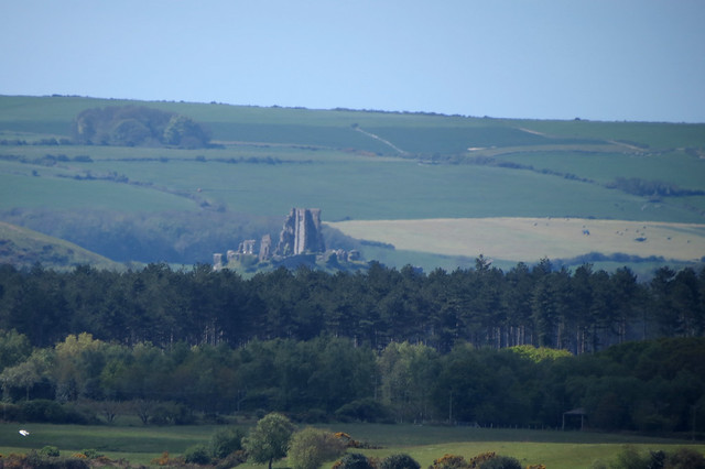 Corfe Castle from Brownsea Island