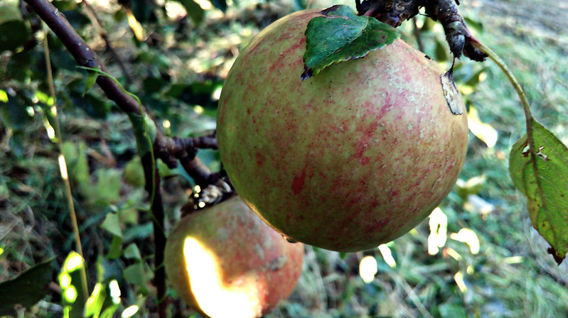 Apple day 2016-apple7