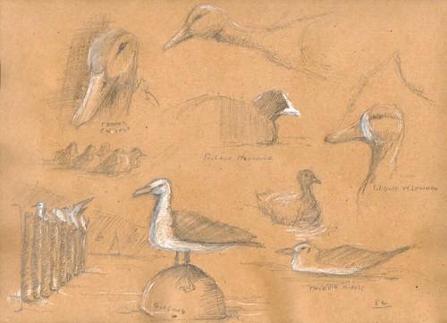 Oiseaux au lac de Paladru (youpi nous avons vu le Milouinan!)