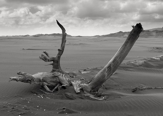 Driftwood at Whaitipu, Fujifilm X100S