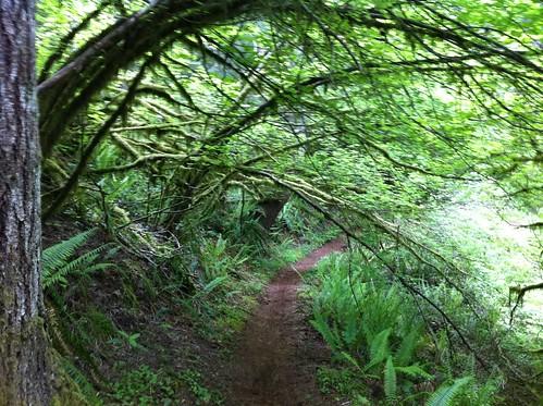 usa washington unitedstates biking mountainbiking capitalforest quackhack mimaporter mosstunnel