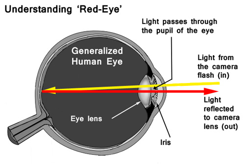 Light entering the eye at a small angle is reflected back out to the camera lens.