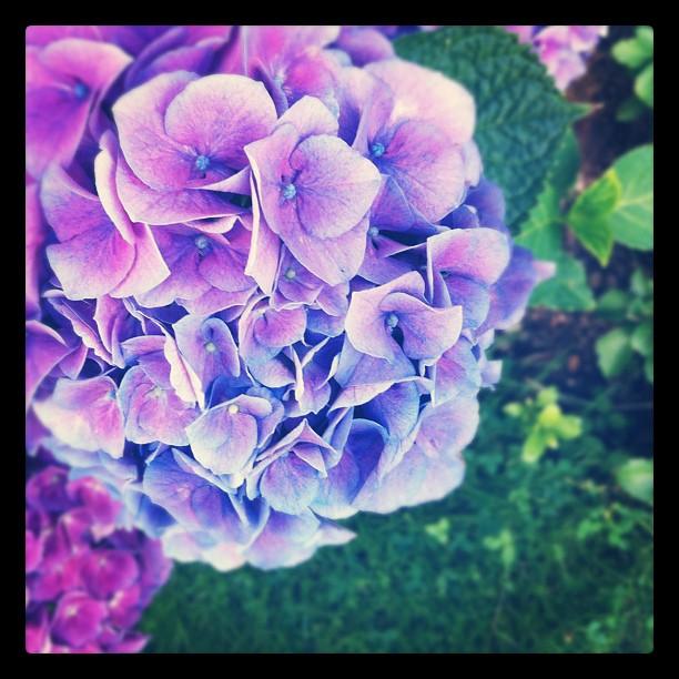 Our neighbors flowers.