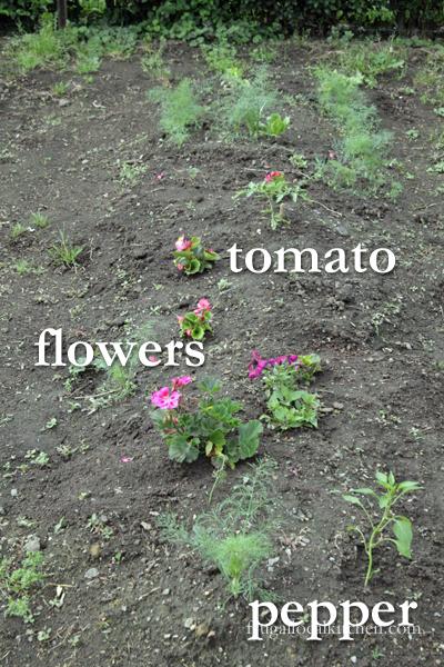 kids-garden-planted-4