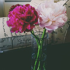 These bloomed too fast. Sigh. #ThingsiLove