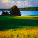 Mississippi Dunes Golf Course - 4x5 Velvia 100 by Zach Boumeester
