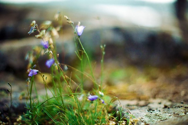 Цветы на берегу
