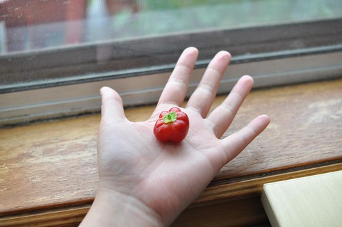 the tiniest pepper ever