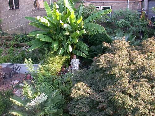 Garden, late August