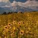 Lone Pine Peak, Eastern Sierra by Robin Black Photography