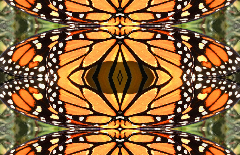 Monarch butterfly pattern