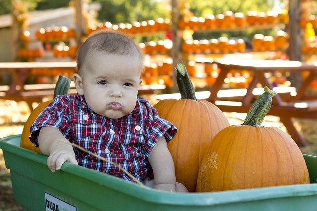 pumpkinpatch2013_adollopofmylife_54