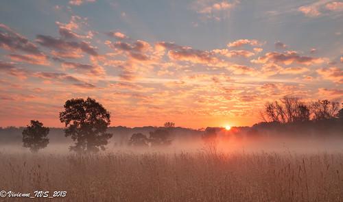 mist fog sunrise illinois preserves lakecounty foggyscenes halfdayforestpreserve