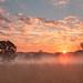 Savanna sunrise by SF knitter