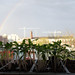 Planties and a Rainbow 2