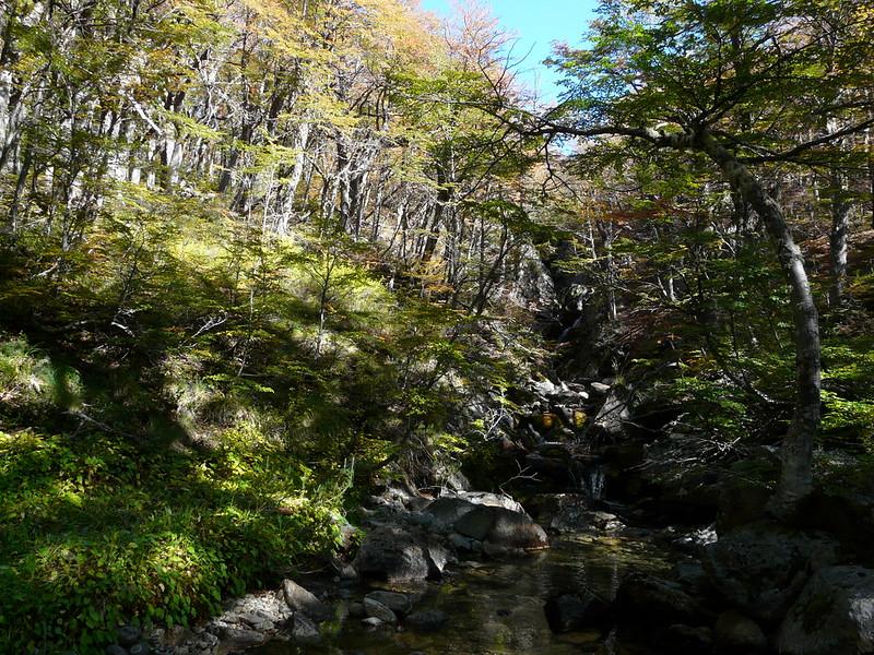 Cascade au milieu des bois