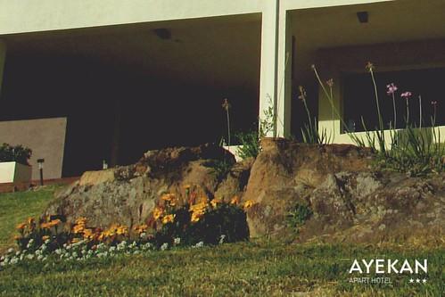 Autor: Apart Hotel Ayekan