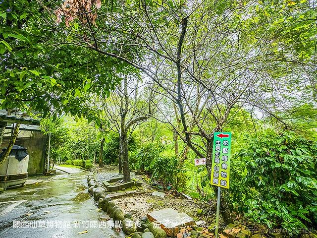 關西仙草博物館 新竹關西景點 美食 57