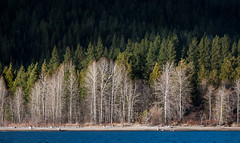 Lake Siskiyou (Visual Acuity)