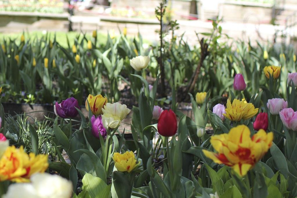 spring break 27428