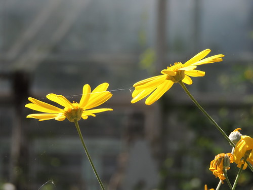 Brooklyn Botanic Garden Series