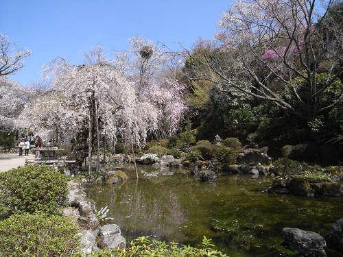 吉野の桜2011@吉野山-20