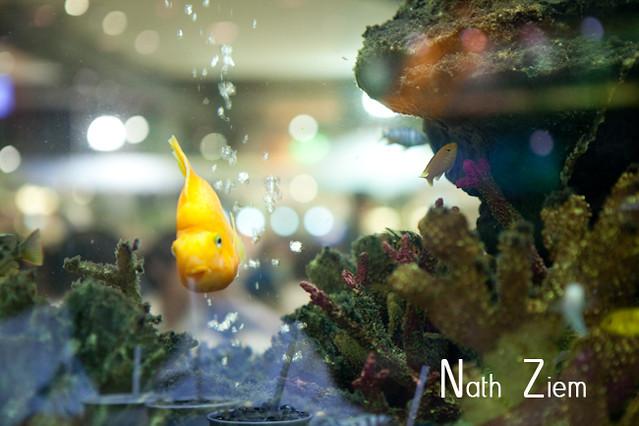 bangkok_aquarium