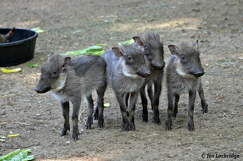 ♪ ♫ When I was a young warthog ♪ ♫