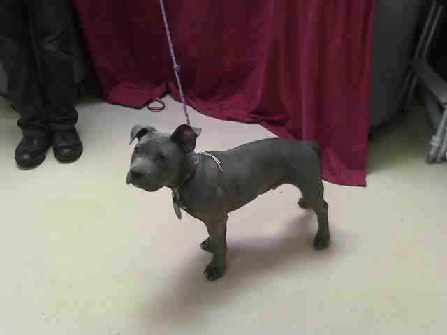 County Wide Dog Training Santa Rosa
