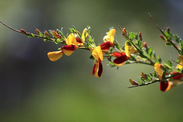 Blomst juni -12