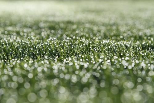"""morning green wet grass canon garden eos austria is österreich d lawn 7 l gras usm grün morgen garten rasen nass bruckmühl rottenmann """"canon 7d"""" """"24105mm"""" """"f4"""""""