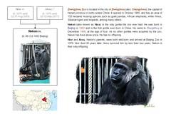 Gorilla: Nekon