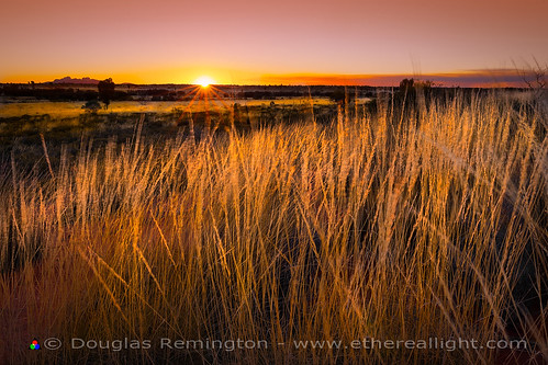 Sunstar Sunset and Spinifex, Uluru-Kata Tjuta national park, Australia - Ethereal Light by Douglas Remington - Ethereal Light® Photography