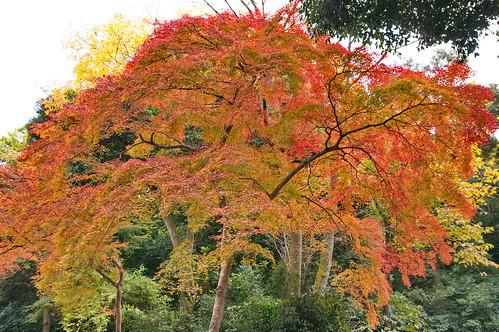 【写真】2012 紅葉 : 醍醐寺/2020-08-07/IMGP6852