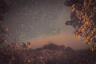 Rainforest Night Shots