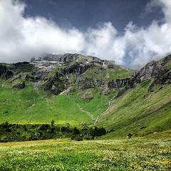 Alpine meadow #nofilter